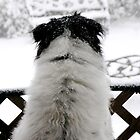Dottie, Snow Watcher by Tibby Steedly