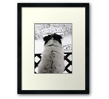 Dottie, Snow Watcher Framed Print