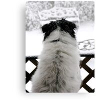 Dottie, Snow Watcher Canvas Print