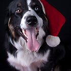 christmas dog by Shawnna Taylor