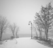 Snow in the Quiet Moment Before it Touches Ground by Tara  Turner