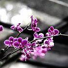 Fuchsia Blossom by Loriene Perera