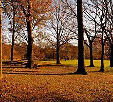 Park Trees by MPICS