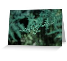 Your Delicate Touch Greeting Card