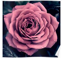 Rose - simple and pretty! Poster