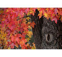 Autumn Blush Photographic Print