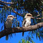 Kookaburras by Janette Rodgers