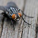 Fly macro by Coreycw