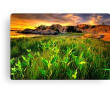 Summer Willow Lake Sunset 1 Canvas Print