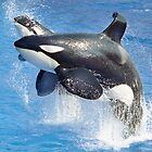 Shamu and Baby Shamu by randmphotos