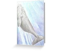 Southern-right whale - pencil on paper Greeting Card