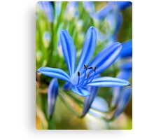 Cool Flame Canvas Print