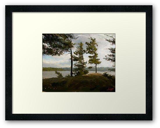 "Achray Pines  (2009)   - 30""x24"" max print size by John Fraser"