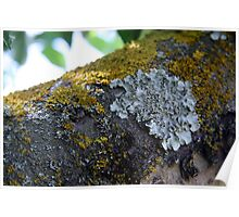 Lichen Like A Flower Poster