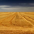 Harvest is Done by JulieM