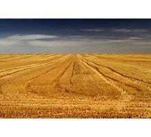 Harvest is Done Photographic Print