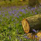 Bluebells by citrineblue