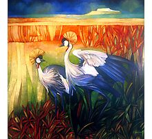 "crane ""balearica pavonina"" Photographic Print"