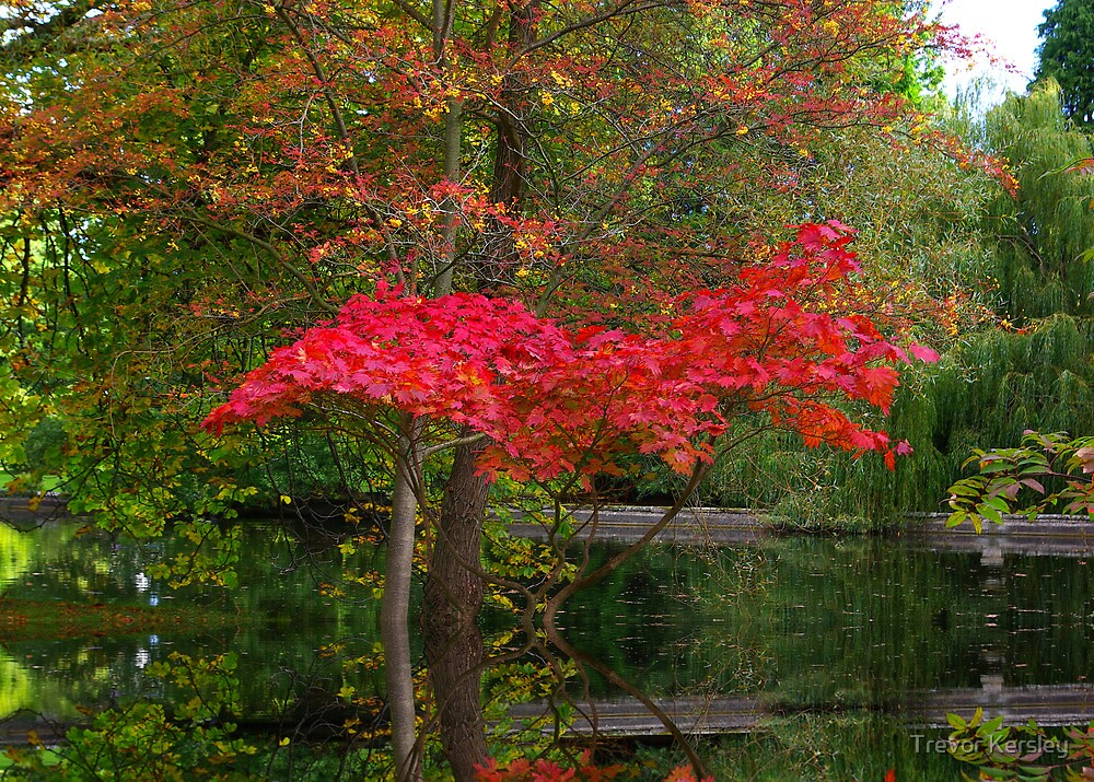 Acer Reflections by Trevor Kersley