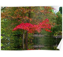 Acer Reflections Poster