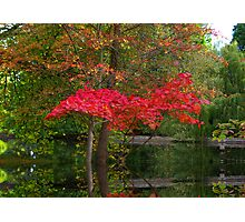 Acer Reflections Photographic Print