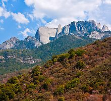 Sequoia National Park by Nickolay Stanev