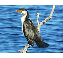 A Safe Perch Photographic Print