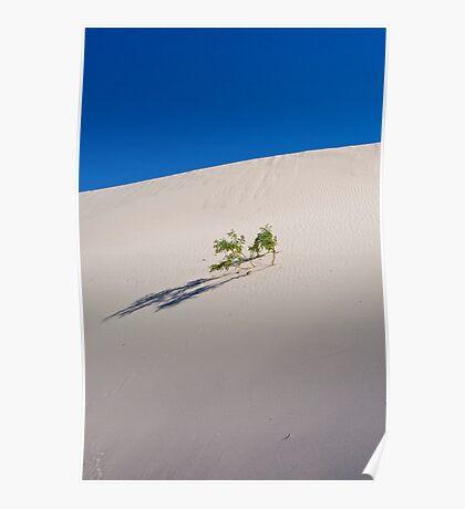 Sand dune - Mungo National Park Poster