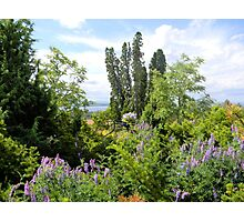 Rural Garden Photographic Print