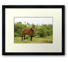 Horse in a Pasture on a Farm Framed Print