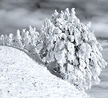 Ice age by Mario Curcio