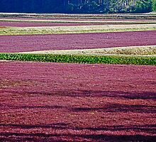 Cranberry Fields Forever by Bryan D. Spellman