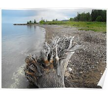 Driftwood On The Beach...Meaford Harbour Poster