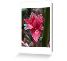 Unfolding (Red Torch Ginger) Greeting Card