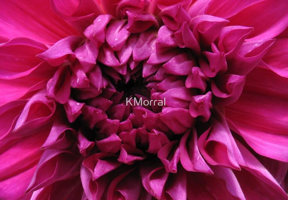 Dahlia Heart by KMorral