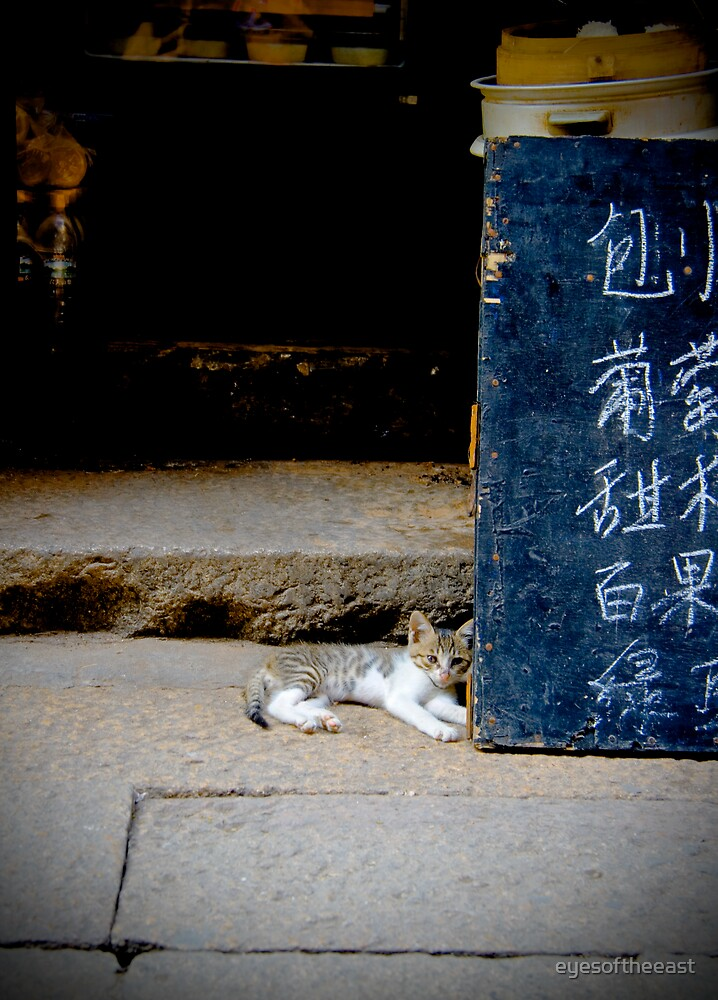 Xitang Cat Chilling Out by eyesoftheeast
