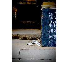 Xitang Cat Chilling Out Photographic Print