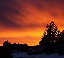 Juniper Fire Sunset by BettyEDuncan
