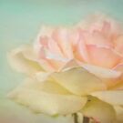 Pastel rose by Eliza1Anna