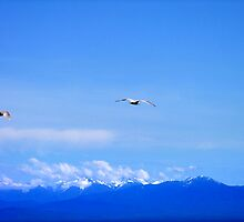 Soaring by George Cousins