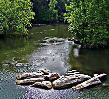 Saluda River I by Ellen  Price - Greenwald