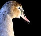 Young Swan VI by Debbie Ashe