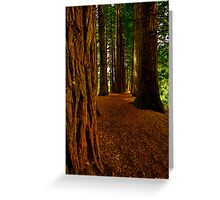 Redwood Grove. Greeting Card