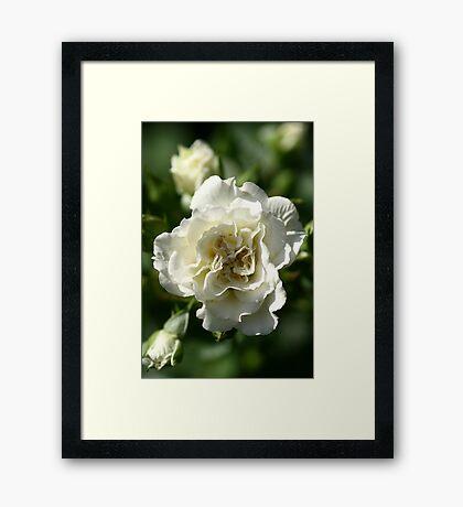 To be White..... Framed Print