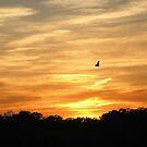 Sunset flight by Sviatlana