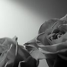 Double Dose of Roses by RockyWalley