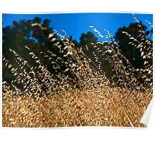 Summer Grass Poster