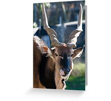 Eland Portrait Greeting Card