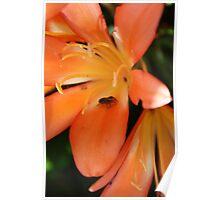 Orange delight...Fly explorer Poster