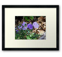 Purple Undergrowth Framed Print